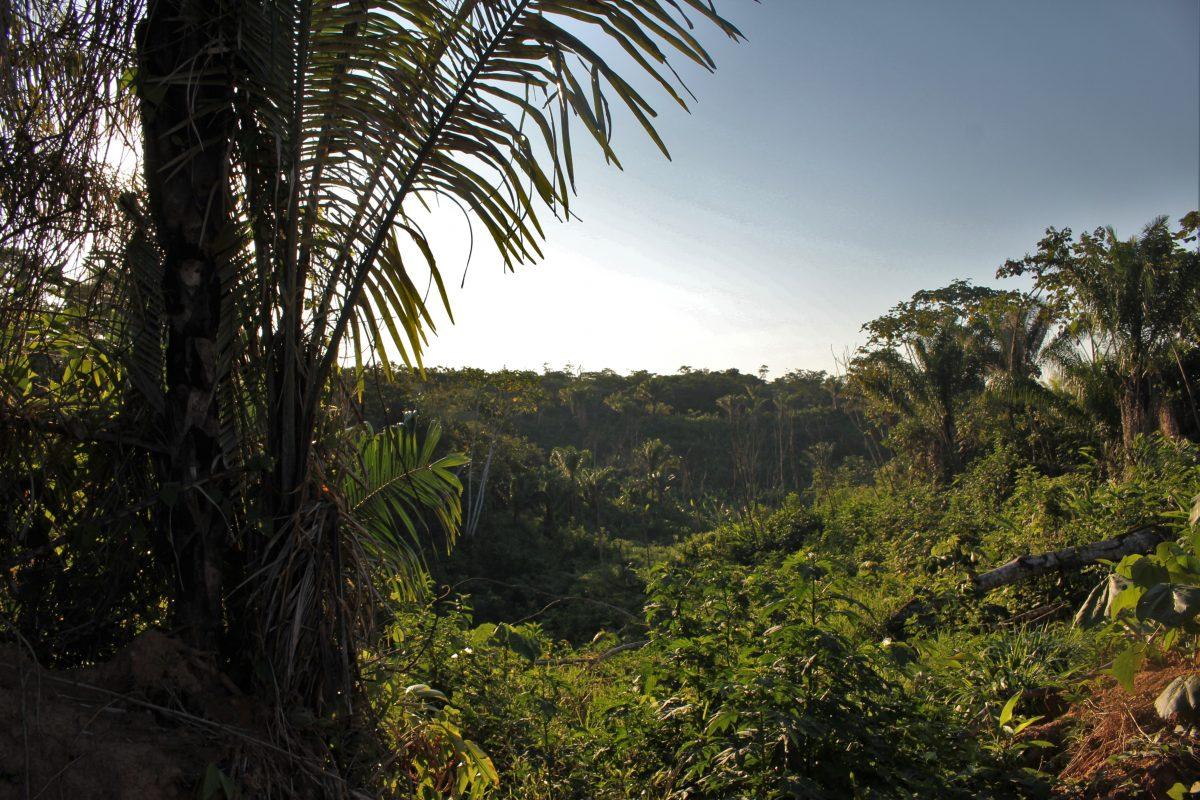 jungle trek.jpg