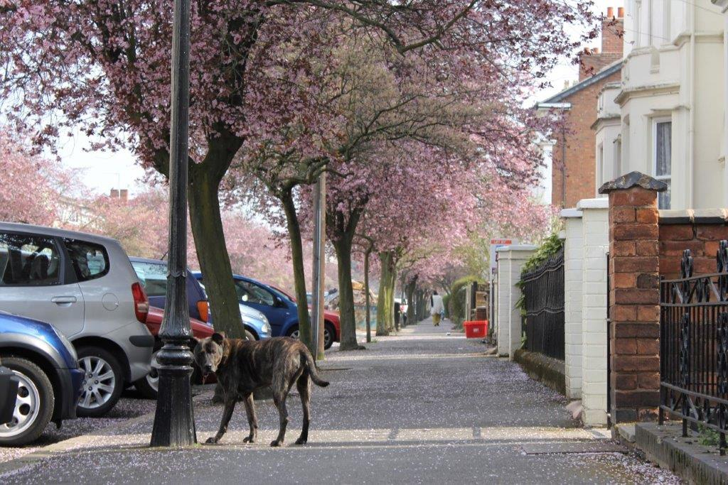 Dog Leamington Spa England