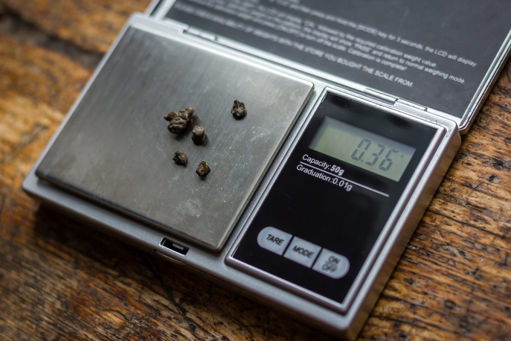 psilocybin magic truffles microdose scales
