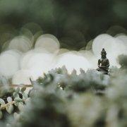 tripsitting buddha