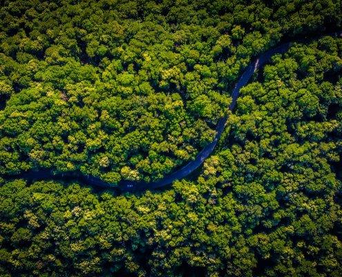 rainforest steve pavlina lessons ayahuasca