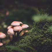 mushrooms high doses psychedelics